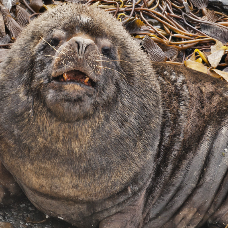 Seals and Sea Lions What is the Difference  Redwood