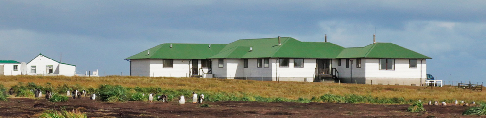Sea Lion Island Lodge with part of the Gentoo Colony in foreground