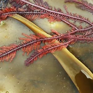 Seaweed Platter